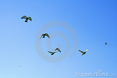 Birds in a blue sky