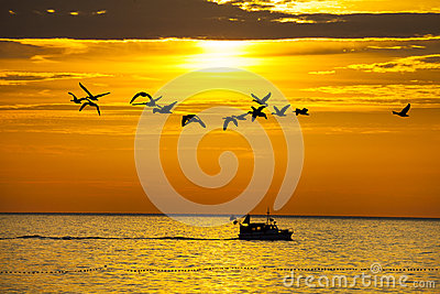 Birds and a boat in sunset