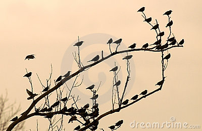 Birds on Bough