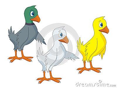Birds cartoon vector illustrations
