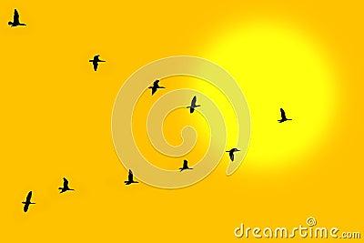 Birds in classic