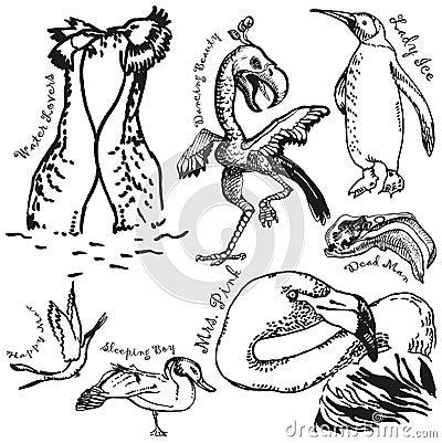 Birds collection 3