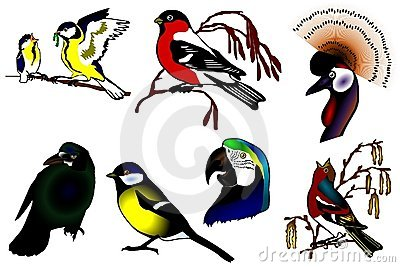 Birds color collection