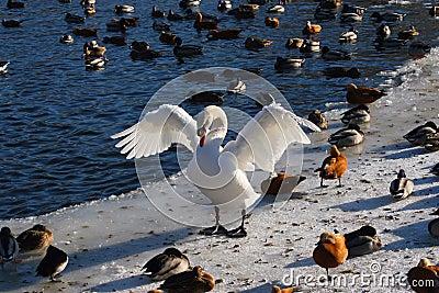 Birds community.