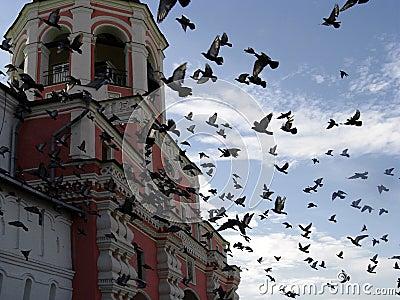 Birds at Danilov Monastery