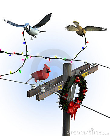 Birds Decorating for Christmas - with clipping path