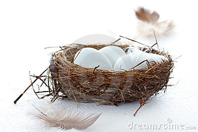 Birds eggs in a nest with feathers