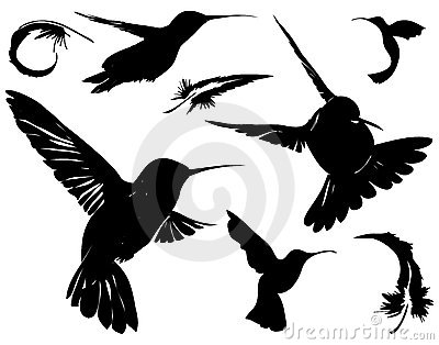 Birds & Feathers Silhouettes