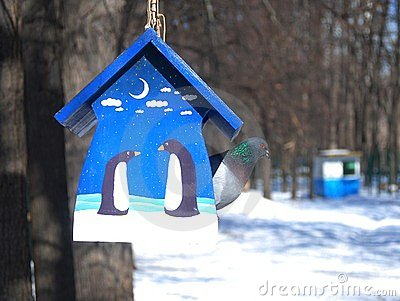 Birds feeder and a pigeon inside in winter