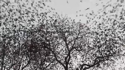 Birds fly away. Form a tree stock footage