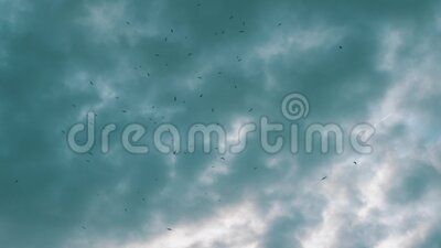 Birds fly in the cloudy sky. Seagulls over the sea stock video footage