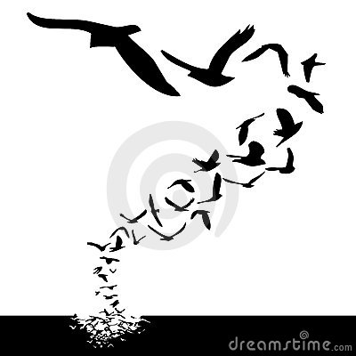 Free Birds Flying Stock Image - 5267911