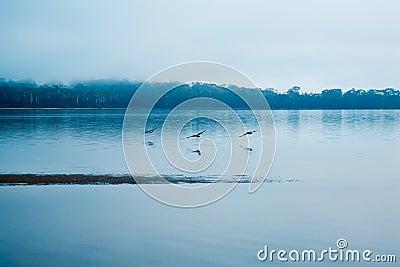 Birds flying along still waters