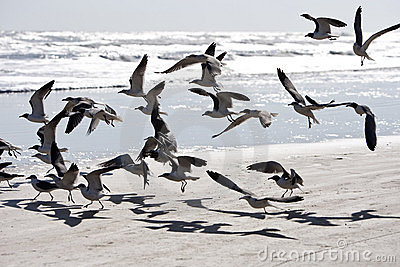 Birds flying at the beach