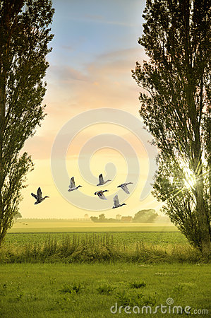 Birds flying in countryside