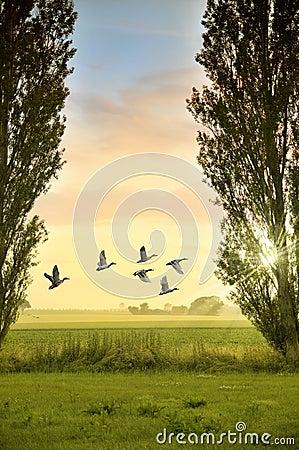 Birds flying in countryside