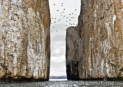 Birds Flying over Kicker Rock, Galapagos
