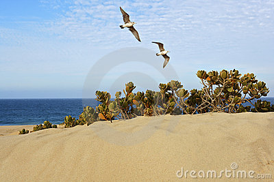 Birds Flying Over Sand Dune at the Beach