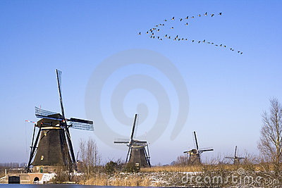Birds flying over windmills