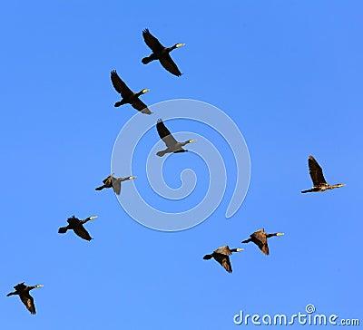 Birds flying in the sky - photo#21