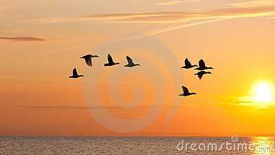 Birds fly in the sky at sunset