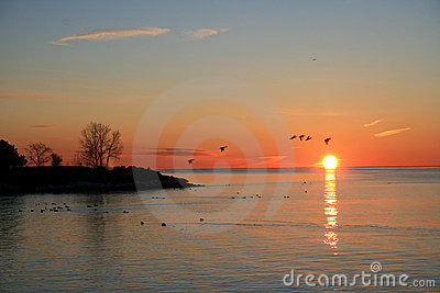 Birds Flying at Sunrise