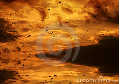 Birds flying in the sunset and reflector in the wa
