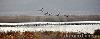 Birds formation, Ahula, Israel