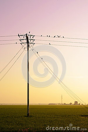 Free Birds Hang Onto Electricity Power Lines. Stock Photography - 89364622