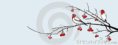 Birds and hawthorn