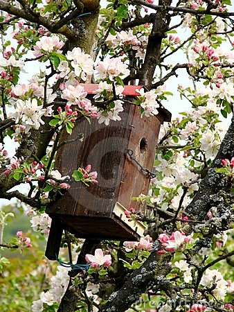 Free Birds House Among Cherry Flowers Royalty Free Stock Photography - 5153017