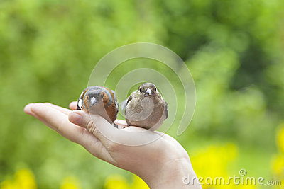 Birds on humans hand