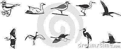 Birds icons