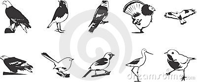 Birds illustrations