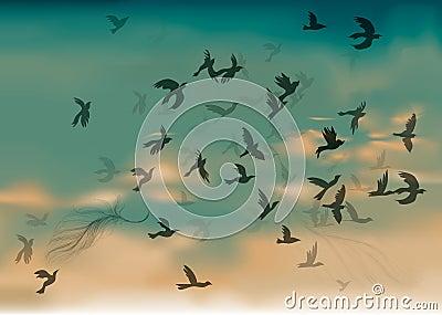Birds Migration