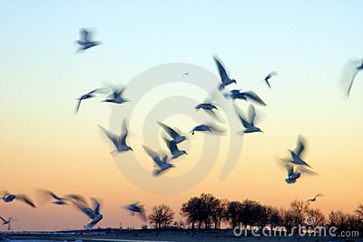 Birds in Motion at Sunset
