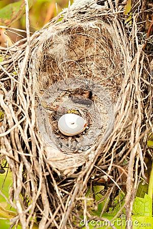 Free Birds Nest Royalty Free Stock Images - 45270469