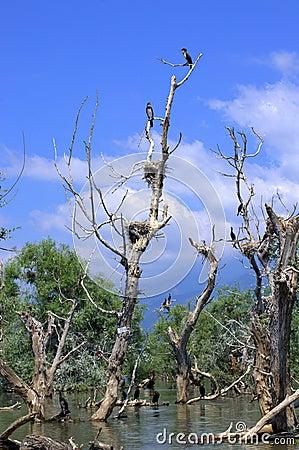 Free Birds Nest On Dead Trees Stock Image - 55058351