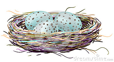 Birds nest with robin eggs