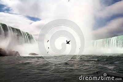 Birds Niagara Falls