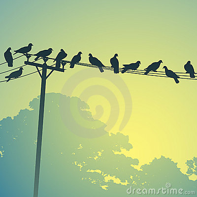 Free Birds On A Lines Stock Images - 21117564