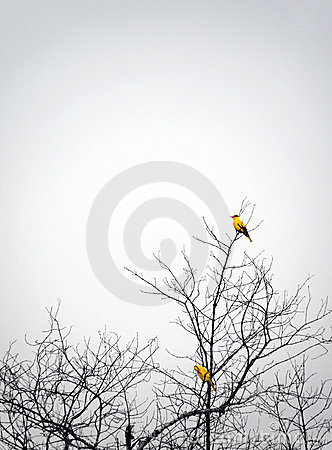 Birds perching in autumn tree mist