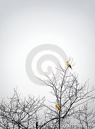Birds perching in autumn tree mist