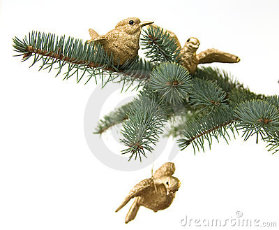 Birds on pine brunch.  Christmas decoration
