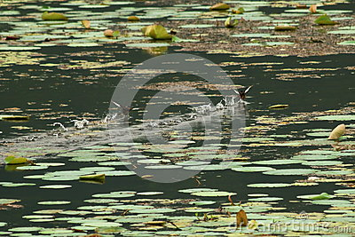 Birds playing on water