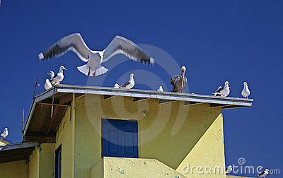 Birds on roof top