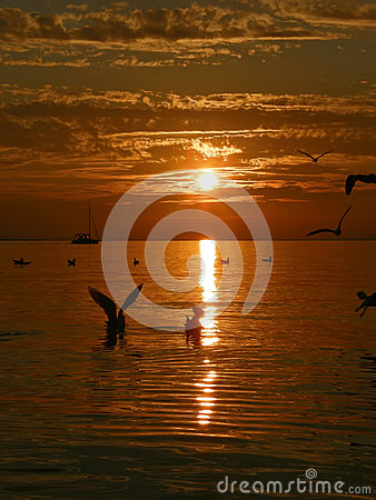 Birds, sailboat, sunset, sea