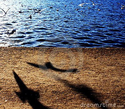 Birds shadows