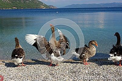Birds by side of ocean