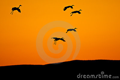 Birds Silhouetted Against Sky